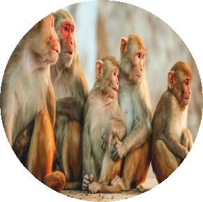 4876-monkeys-1296x728-header.png