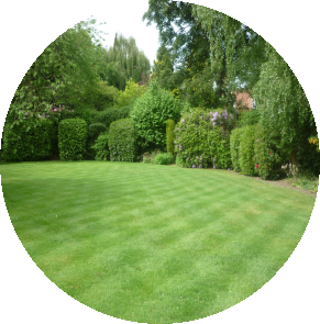 large-rear-lawn-with-green-shrubs.png