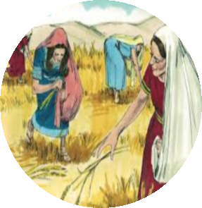 ruth-gleaning.png